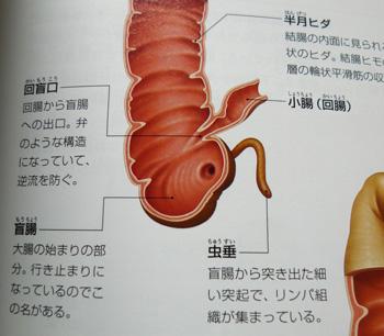盲腸部分写真