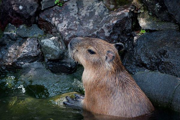 京都市内の塩化物泉を調べてみた