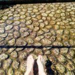 下鴨神社と美人水と御手洗池